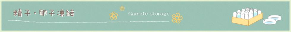 精子・卵子凍結 Gamete storage